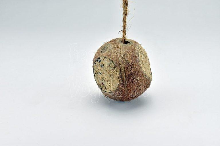 Kokosnoot, hele noot gevuld met vogelvoer