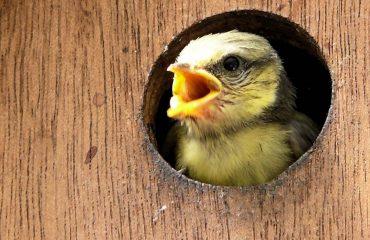 Waarom vogelhuisjes ophangen en wat is de beste plek?