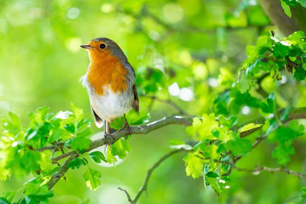 verantwoord tuinvogelvoer
