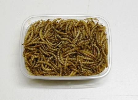 Meelwormen,gedroogd 25gr.